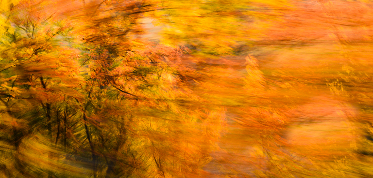 A panning experiment out of the car window