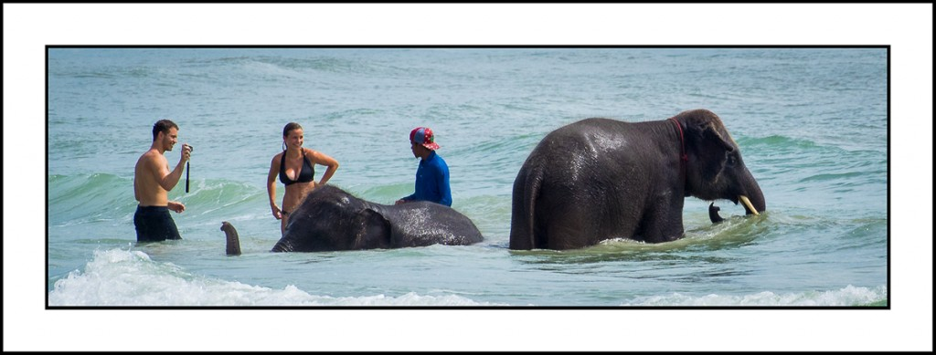 Koh Chang beach elephants