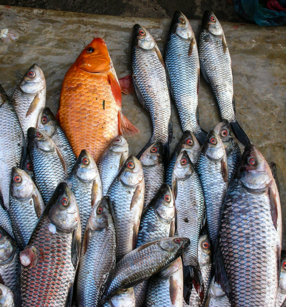 embarrassing Myanmar fish
